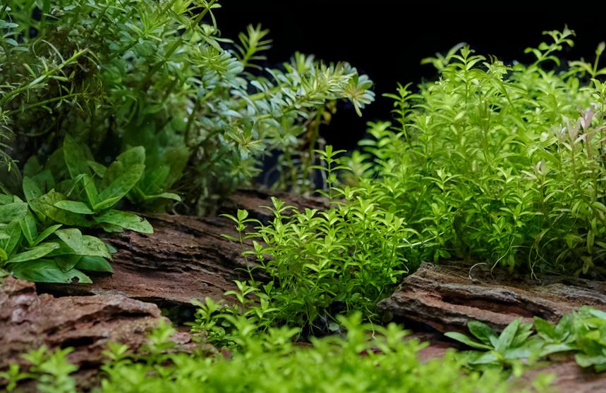 Jak Sadzić Rośliny W Akwarium Sklep Akwarystyczny