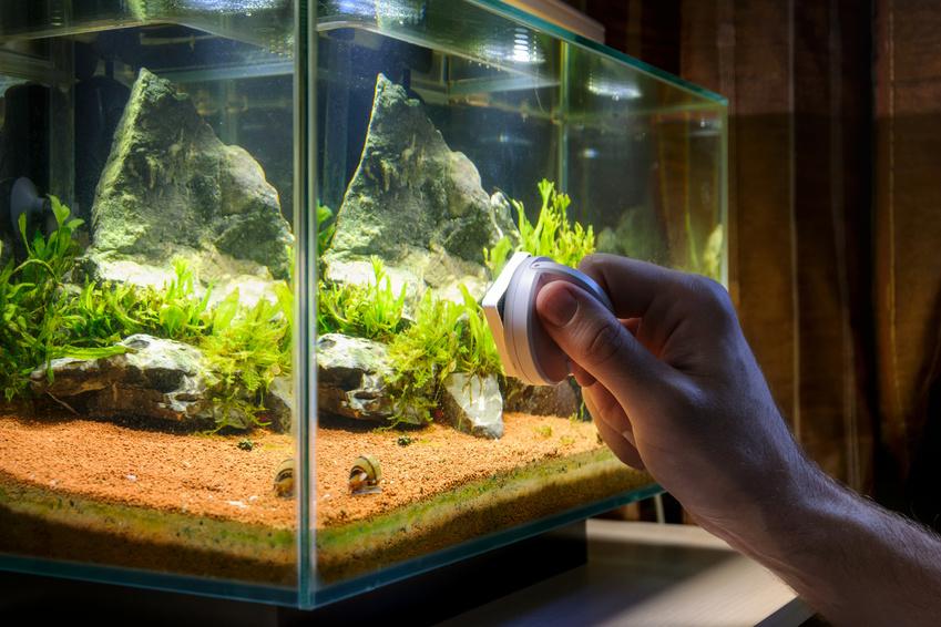 Jak Szybko I Skutecznie Czyścić Akwarium Sklep