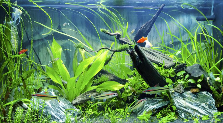 Dbamy O Rośliny Akwariowe Planticapl Sklep