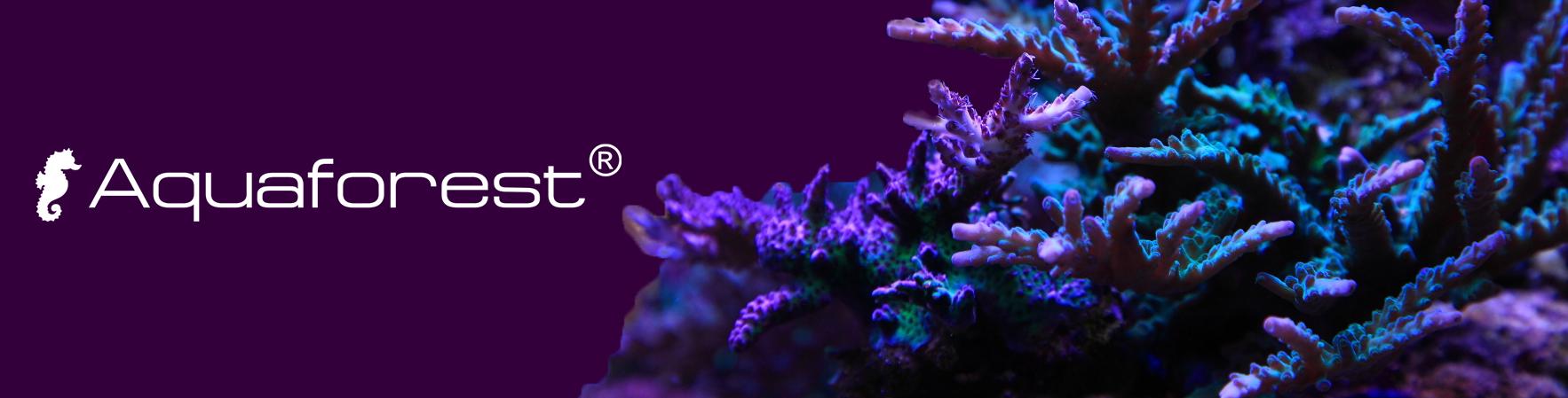 Aquaforest baner