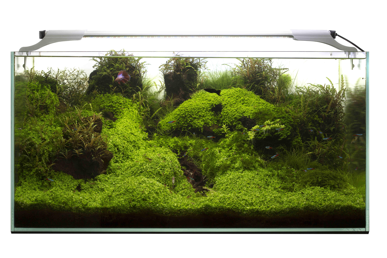 Aquael Leddy Slim Plant Lampa Led 36w 100 120cm Sklep